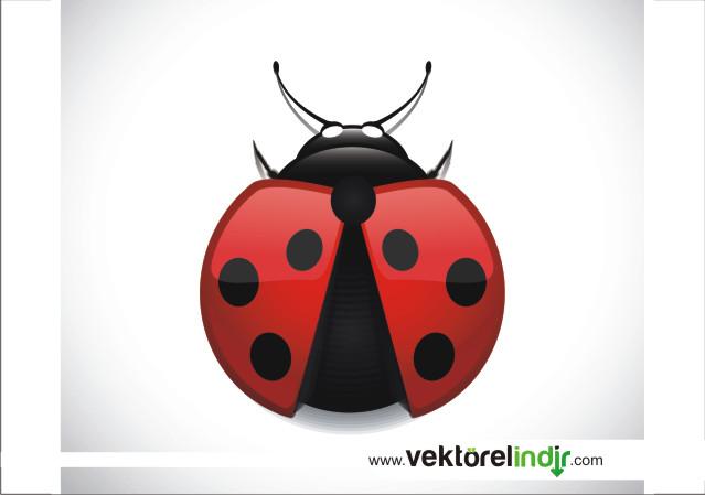 Uğur Böceği Vektörel