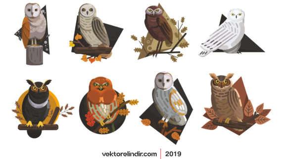 Baykuş, Kuş, Hayvanlar