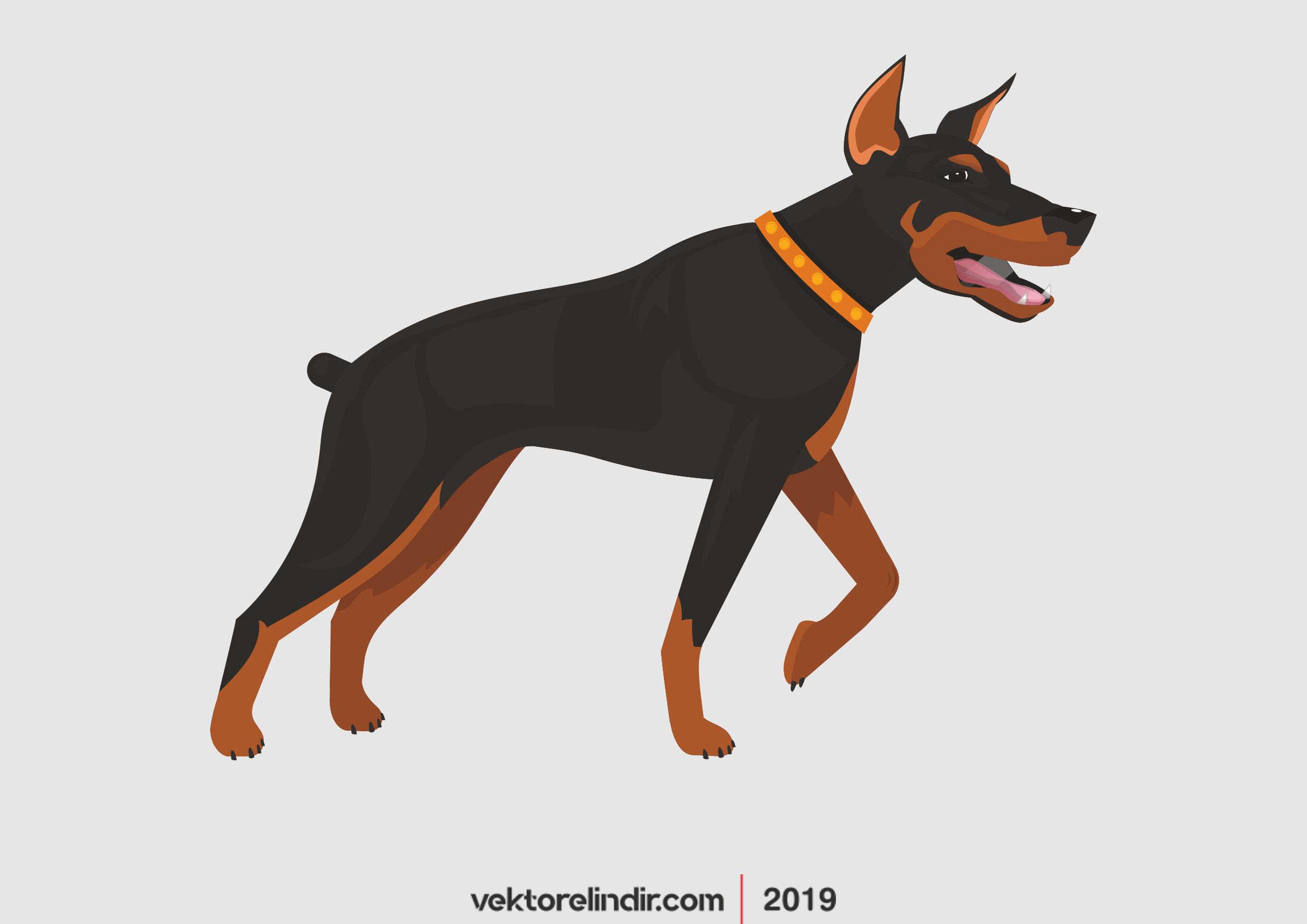 Köpek, Doberman, Hayvan