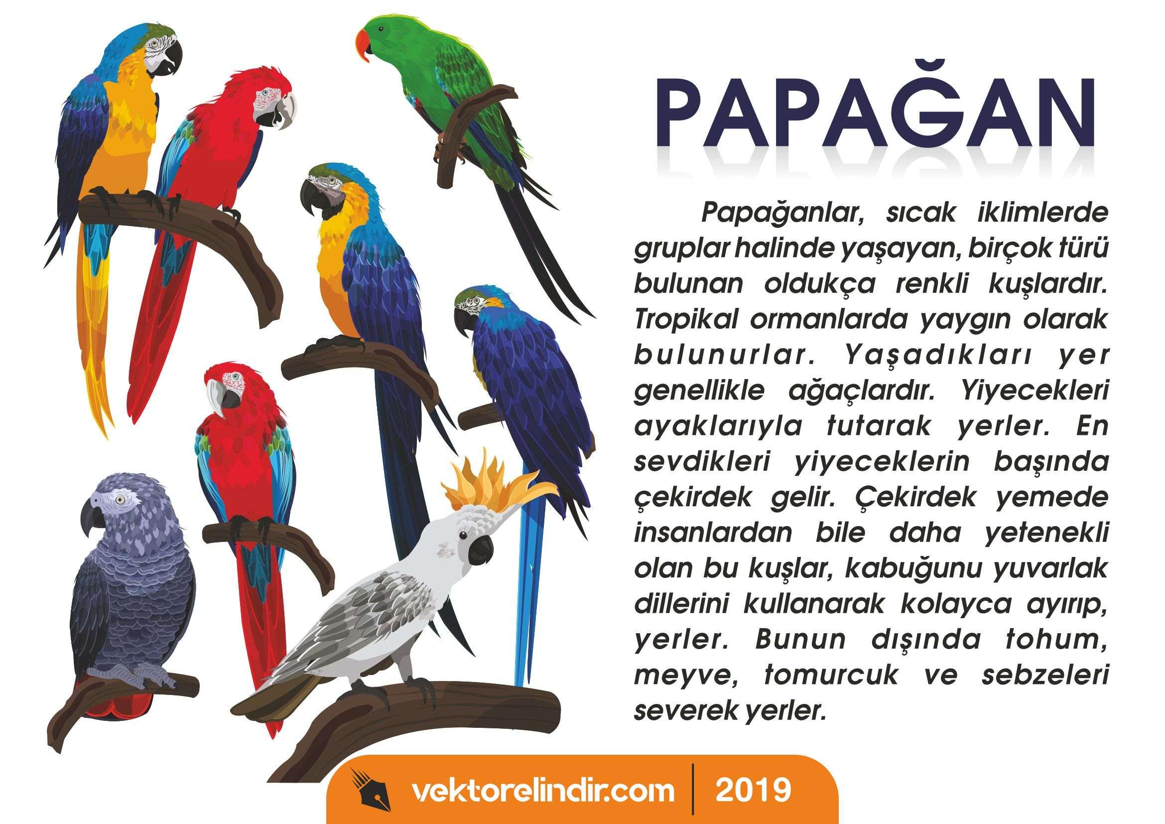 Papağanlar, Kuşlar, Kanatlı Hayvanlar